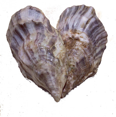 Aphrodite Oysters