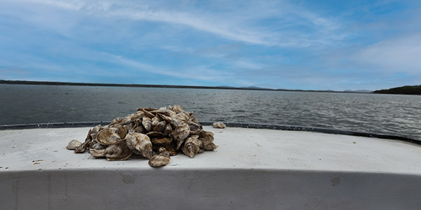 Oyster Fishing on a Sunny Day